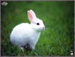 Rabbit Mod AA :: Release V4.0
